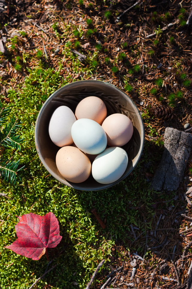 Farm eggs | A trip to Woodstock, Vermont