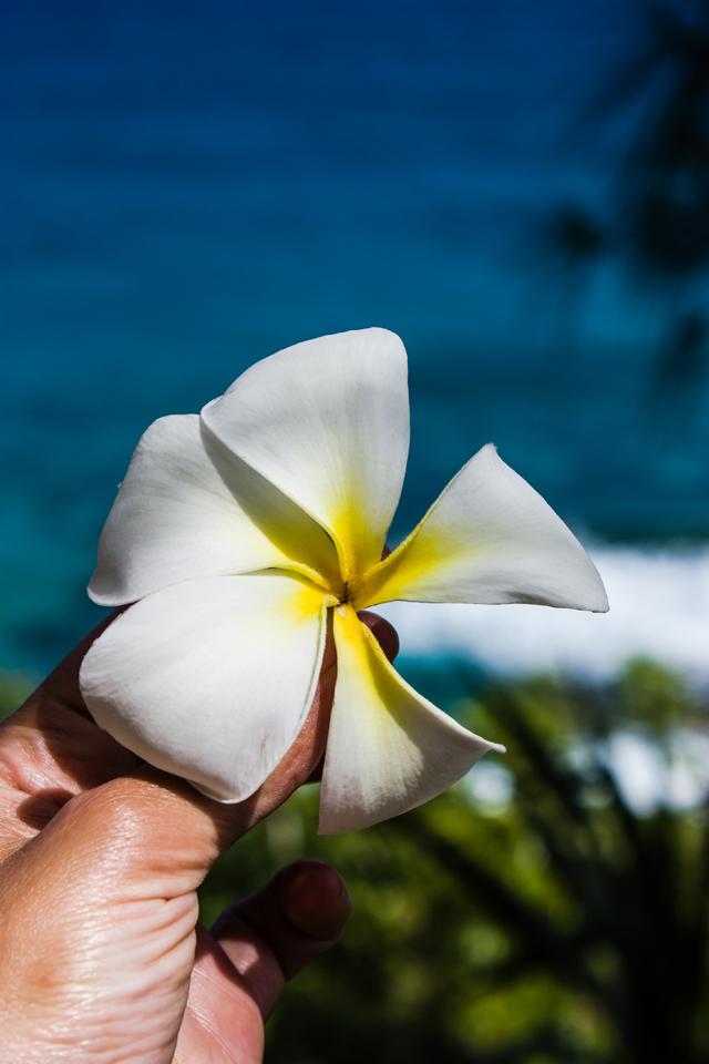 Hawaii_RET-121